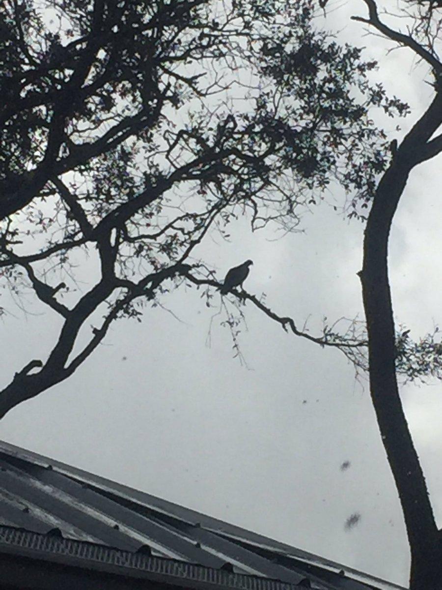 #Carl neighborhood #Osprey<br>http://pic.twitter.com/5O3FctBBJs