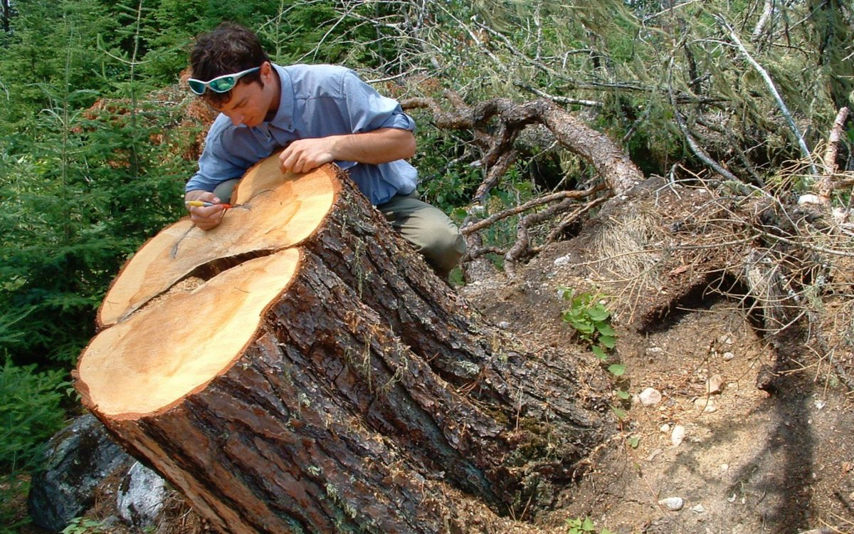 Dendrochronology or tree-ring dating is the scientific method of dating based on the analysis of patterns of tree-rings.