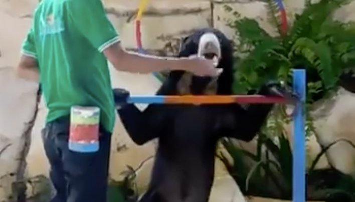 Victory! Thanks to a Petition And Your Support, an Abused Sun #Bear And #Orangutan Are Now Free   http://www. onegreenplanet.org/news/thanks-to -petition-abused-sun-bear-and-orangutan-are-now-free-video/ &nbsp; …  #AnimalRights<br>http://pic.twitter.com/IQEl12cRSU