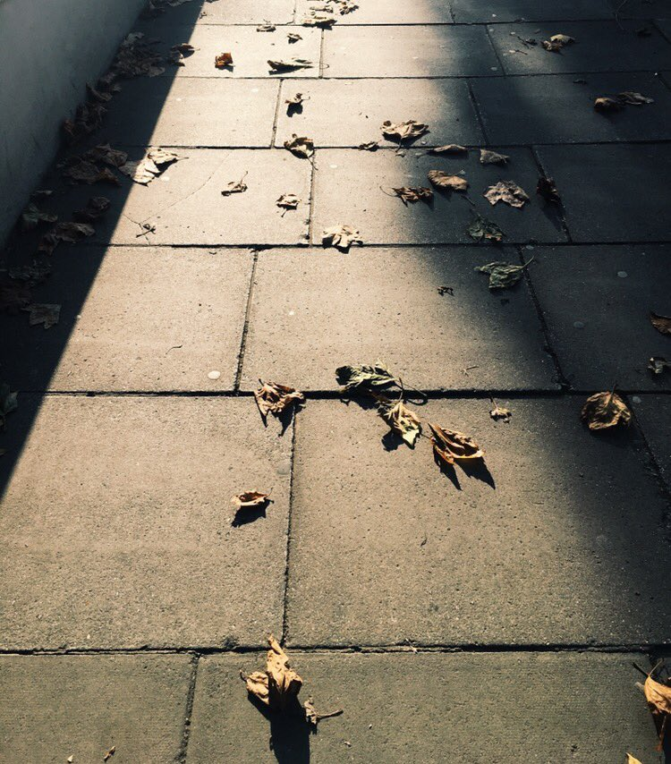 Follow the autumn leaves... #music #singer #singersongwriter #autumn #autumnleaves #HelloAutumn #Sunday<br>http://pic.twitter.com/O6B6m27LwJ