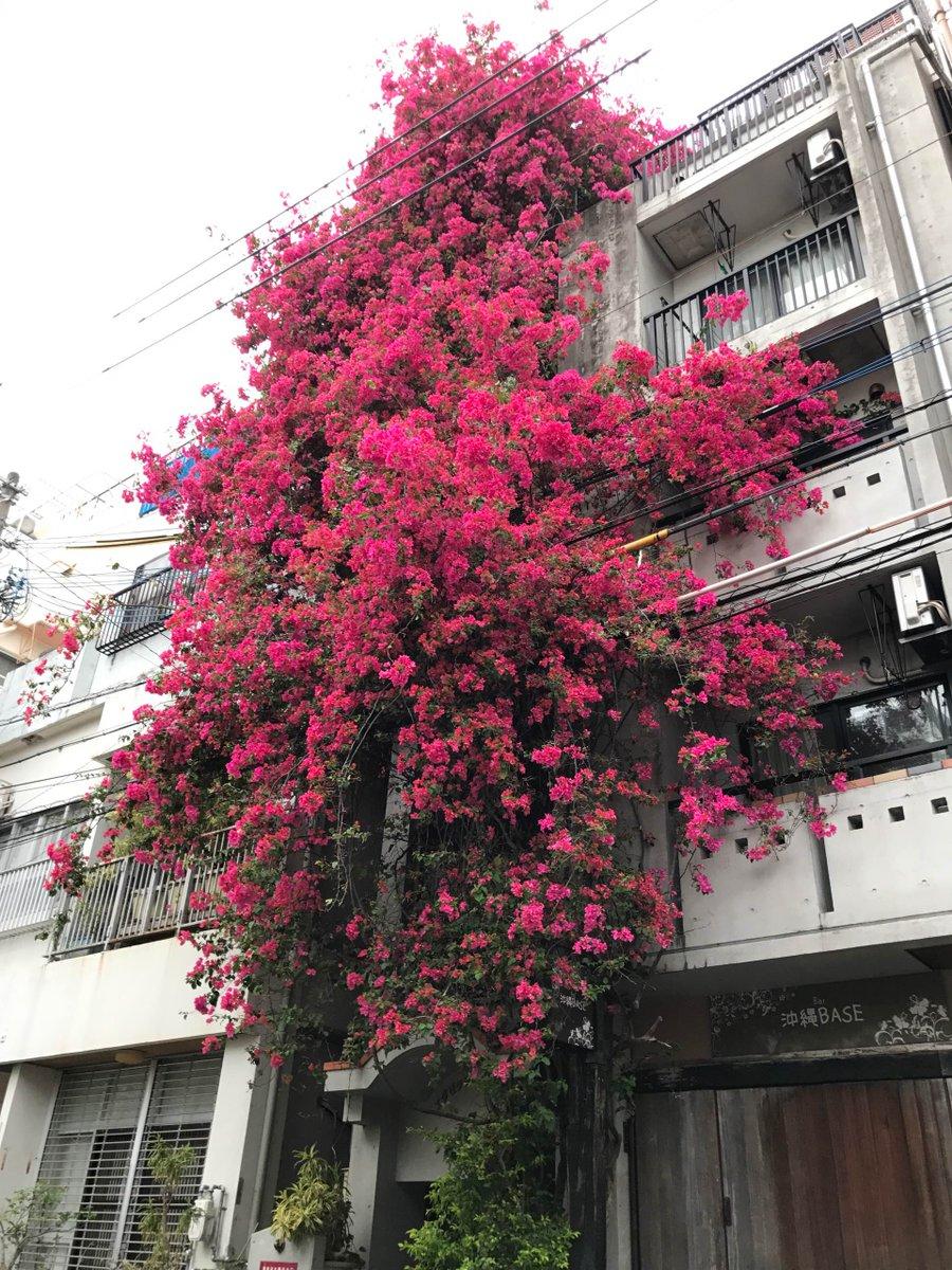 沖縄の植物は、びっくりするような風景を作ることがある。 https://t.co/3uwhbI6sEY