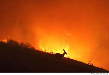 #California! Please Don&#39;t leave buckets of water for animals fleeing #CaliforniaWildfires. The animals need to do one thing... Flee. Fast.<br>http://pic.twitter.com/MF6QoA2TFN