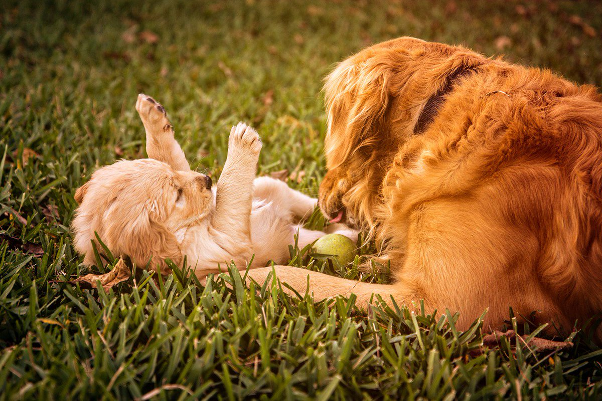 Stop #Mommy! I am ticklish! #dog #friends<br>http://pic.twitter.com/IMnK0AxZkv