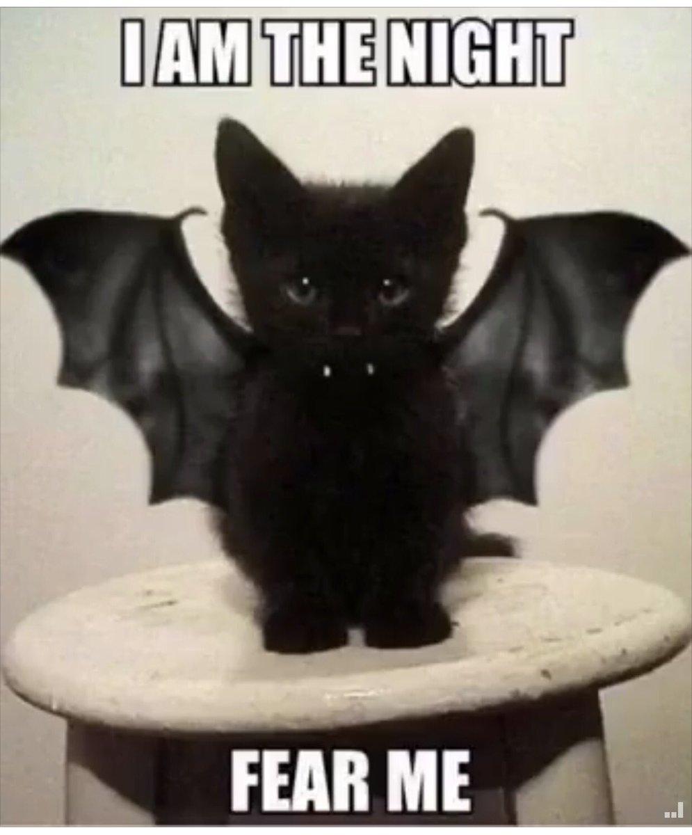 Kittens are terrifying!?! #October <br>http://pic.twitter.com/7V9bdbygb9