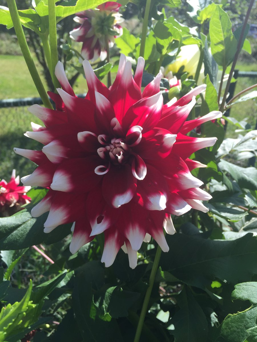 &quot;A year from now you&#39;ll wish you had started today.&quot; - Karen Lamb #OctoberWeather #SummerFlowers #Motivation #Entrepreneur #Inspirational<br>http://pic.twitter.com/XVbA8Cl3aP