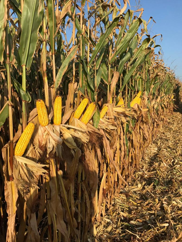RT @13drozd If you treat @DuPontPioneer P0993HR right, it will treat y...