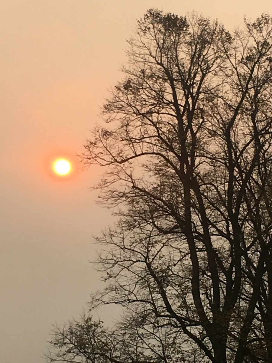 #redsun over Cheveley Park Stud this afternoon ☀️🐎