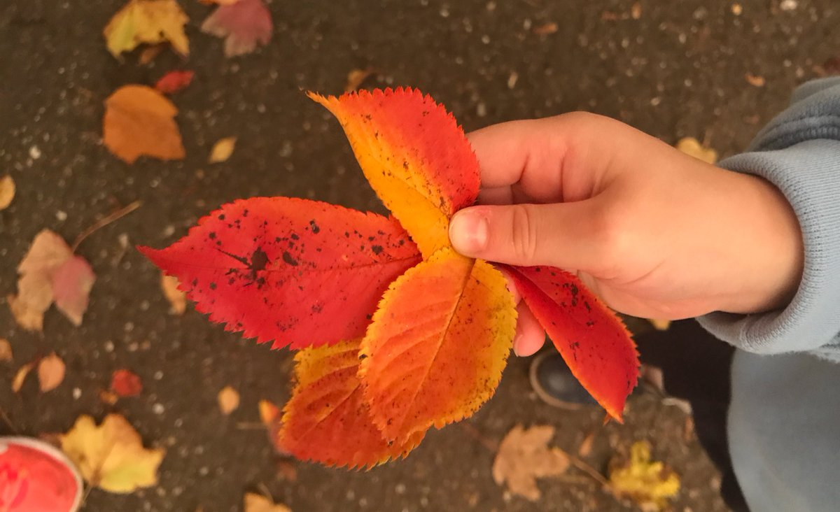 Discovering beautiful #treasures #autumn has to offer. Children learn so much #outside, even when the sky goes dark and a storm is brewing!<br>http://pic.twitter.com/QoMPYTwt5Z