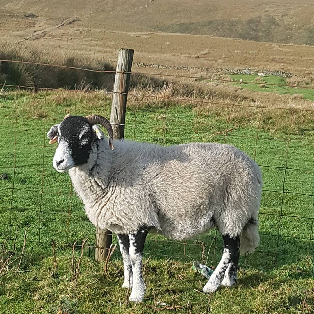 Don&#39;t see many of these in somerset #swaledale <br>http://pic.twitter.com/Wxo0JpqPJJ