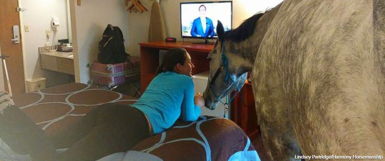 Woman tests the limits of hotel's pet policy by bringing in her horse: https://t.co/D5q7XOy40l