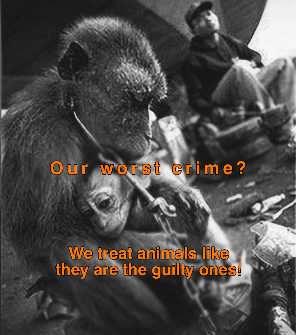 Our worst crime?  We treat #animals like they are the guilty ones! Billions plea for #mercy but we ignore every cry Time to #listen &amp; #act!<br>http://pic.twitter.com/9wBDVQPYhb