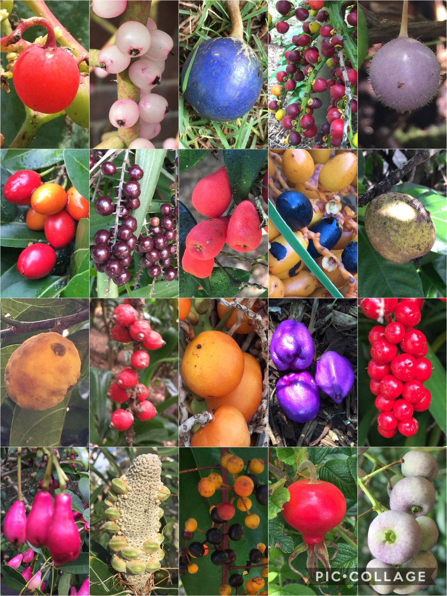 Today's #collage is #fruit, the seed bearing structures carrying genetic material of the next generation. Beautiful in their own right! <br>http://pic.twitter.com/AqYysjuirr
