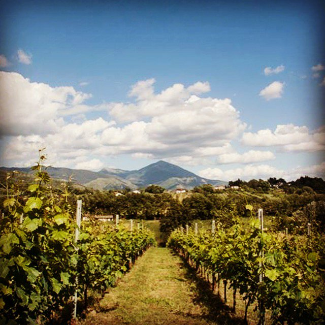 test Twitter Media - Special offer! Get 30% off this 5-day #eco #biodynamic #wine holiday @palazzotronconi #italy: https://t.co/ISVUwDGT0e https://t.co/rJdbyEbMdw
