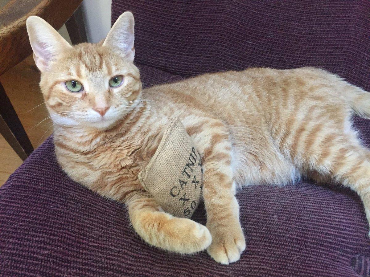 Got catnip? #catnip #cute #cat #orange #kitten #aww #ellenratemycat #happy #monday #pose #love #neko #reythekitten<br>http://pic.twitter.com/QMEMGBc6Ka