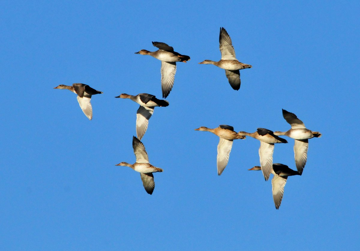 20 waterfowling destinations on #publicl...
