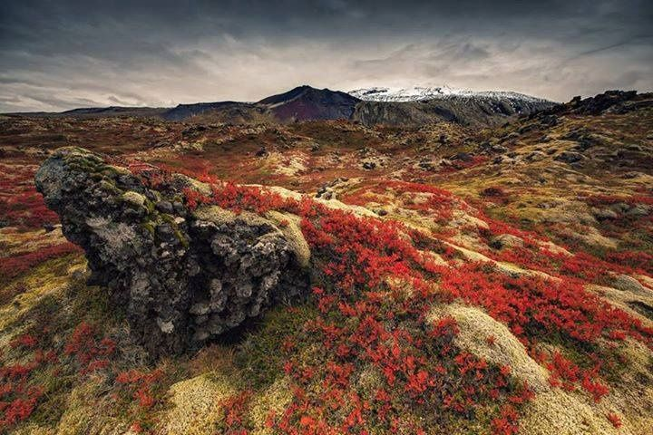 Iceland Leaves Enormous Environmental Footprint - #enviro  https:// buff.ly/2ynAWfs  &nbsp;  <br>http://pic.twitter.com/WduHpNqosv
