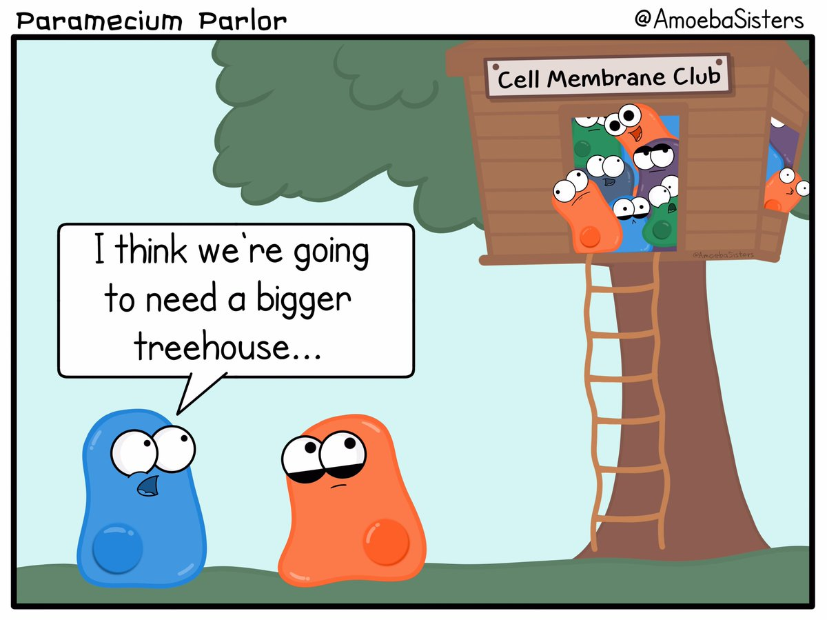 4 things cells do to maintain homeostasis - Amoeba Sisters On Twitter All Cells Have Membranes Super Important For Cells To Maintain Homeostasis Amoebasisters Cells Biology