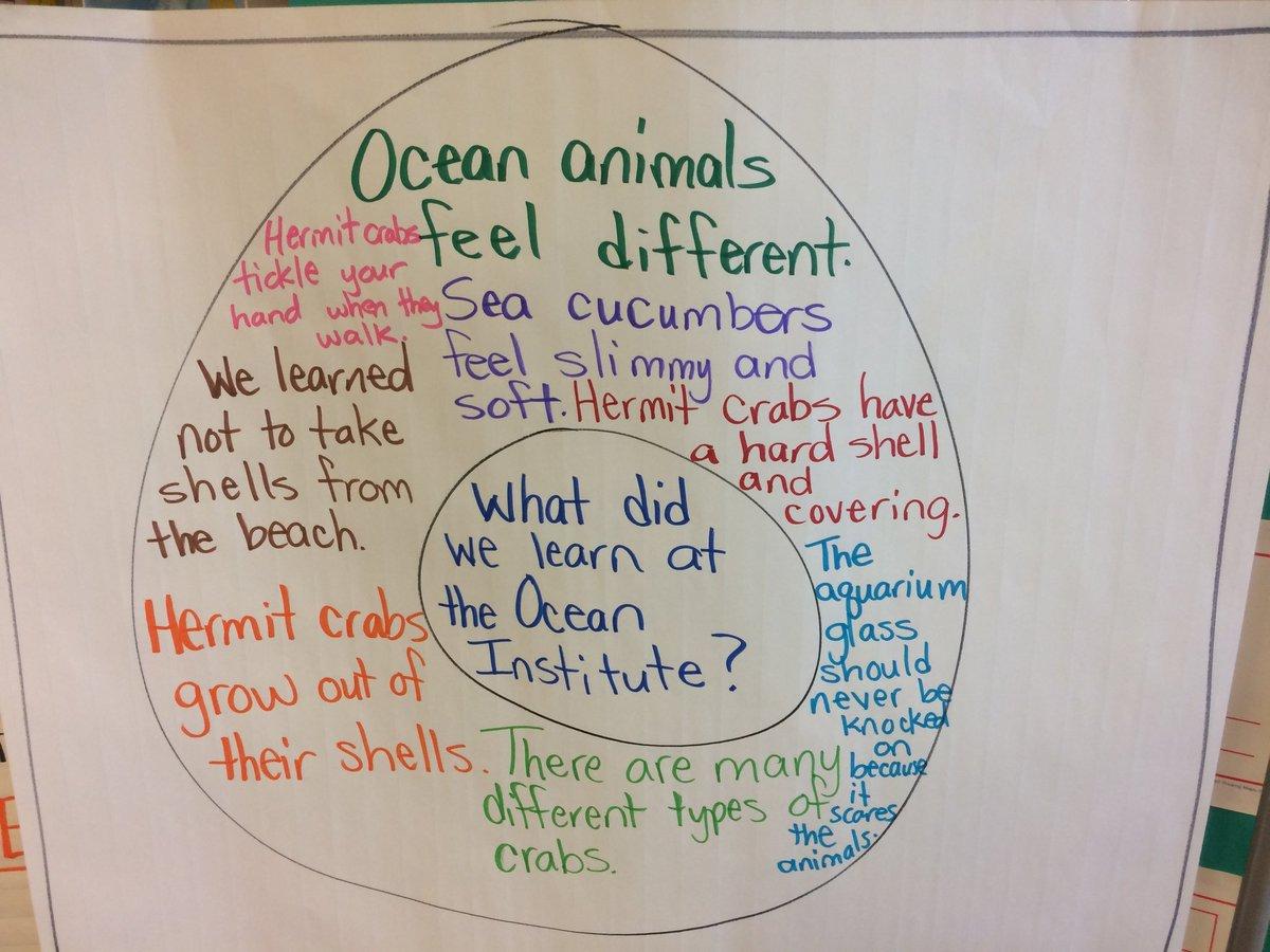 Estudiantes de grado 1 visitaron el Instituto del Mar. Les encanta hablar sobre las grandes cosas que aprendieron. Gracias @OceanInstitute 🦀