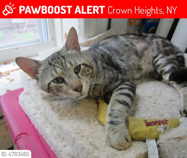 Please RT! Have you seen Genius Cat? #missing #lost #pet in #Brooklyn #NY 11213  https://www. pawboost.com/p/4783465  &nbsp;  <br>http://pic.twitter.com/Rc2YuxdXiQ