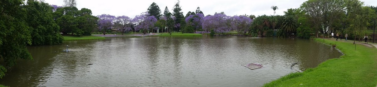 I work at one of the most beautiful campuses on Earth   https:// tldrmoviereviews.com/2017/10/11/exp lore-it-jacaranda-flowering-time-at-the-university-of-queensland/ &nbsp; …  #UQ @UQ_News<br>http://pic.twitter.com/pwjrP2Gmz5