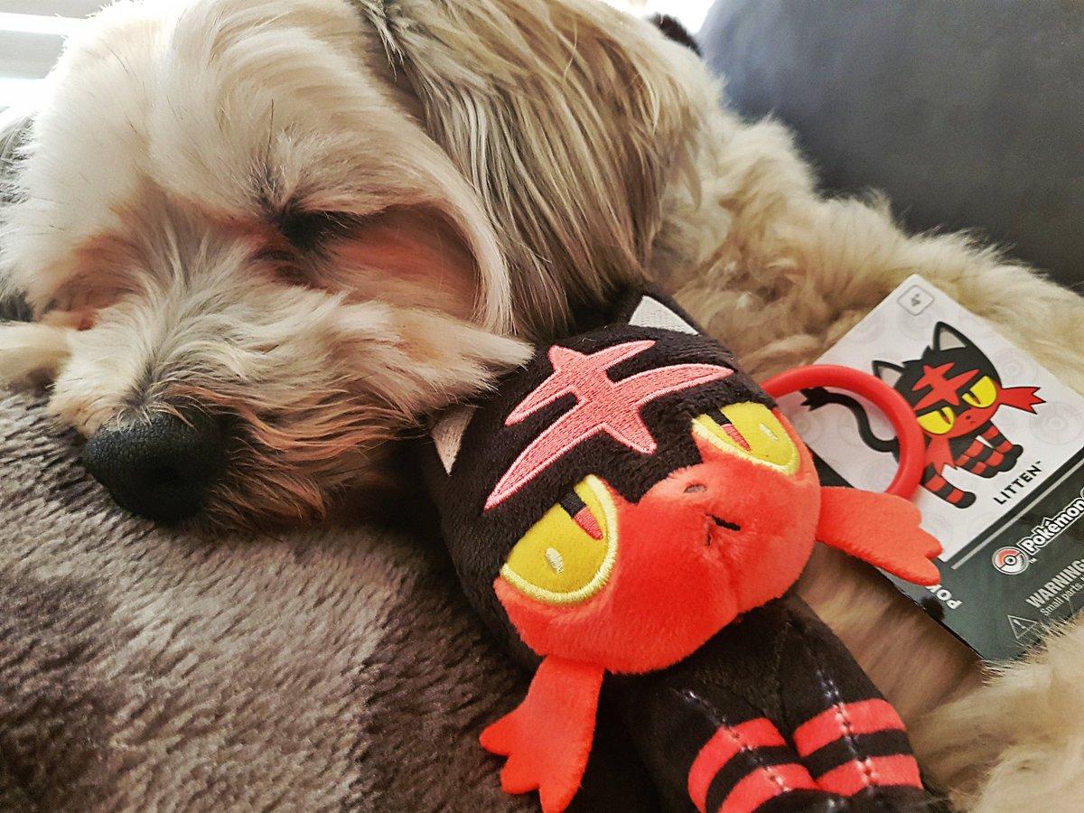 Best #doggo in the world.... AND he likes #pokemon  #litten #playpokemon #vgc #tcg #Nintendo #3DS #cute #puppy<br>http://pic.twitter.com/j4RFAgNgoI