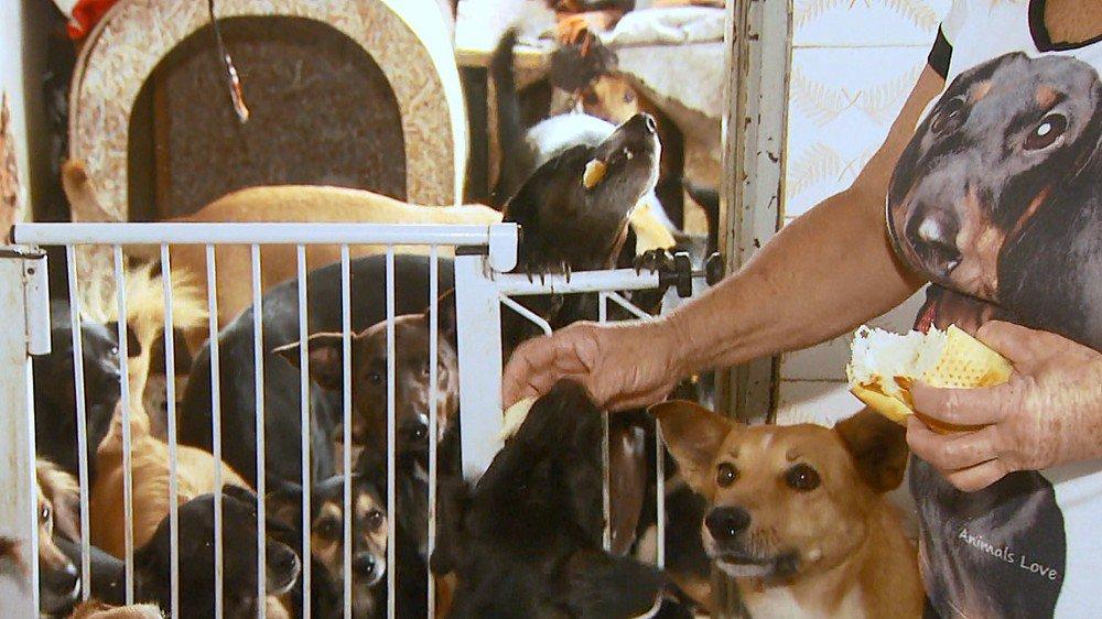 Dona de casa pede ajuda para cuidar de 65 cães resgatados das ruas em Rio Claro, SP https://t.co/3yHfeFWG1w #G1