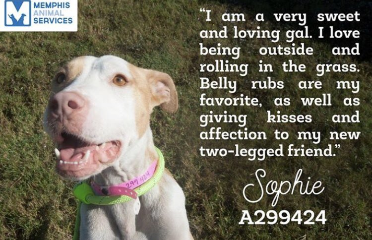 #TN #MEMPHIS SPECIAL PLEA Sophia 3yo girl CRUELTY CASE very sweet &amp; loving needs her hero now!! #Adopt #Rescue  https://www. facebook.com/MemphisAnimalC onnection/posts/1982264358728441 &nbsp; …  <br>http://pic.twitter.com/hWCb9suRSm