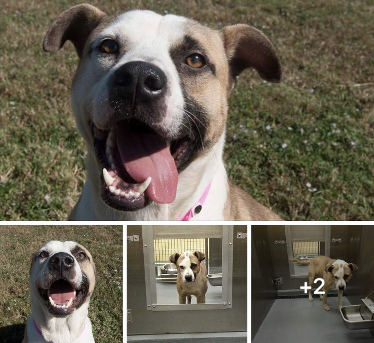 #TN #MEMPHIS #SOS CRITICAL 2yo female loving affectionate, a great pet! Needs a hero now! #ADOPT #RESCUE #FOSTER   https://www. facebook.com/MemphisAnimalC onnection/posts/1983491465272397 &nbsp; …  <br>http://pic.twitter.com/VhSEjUEYXZ