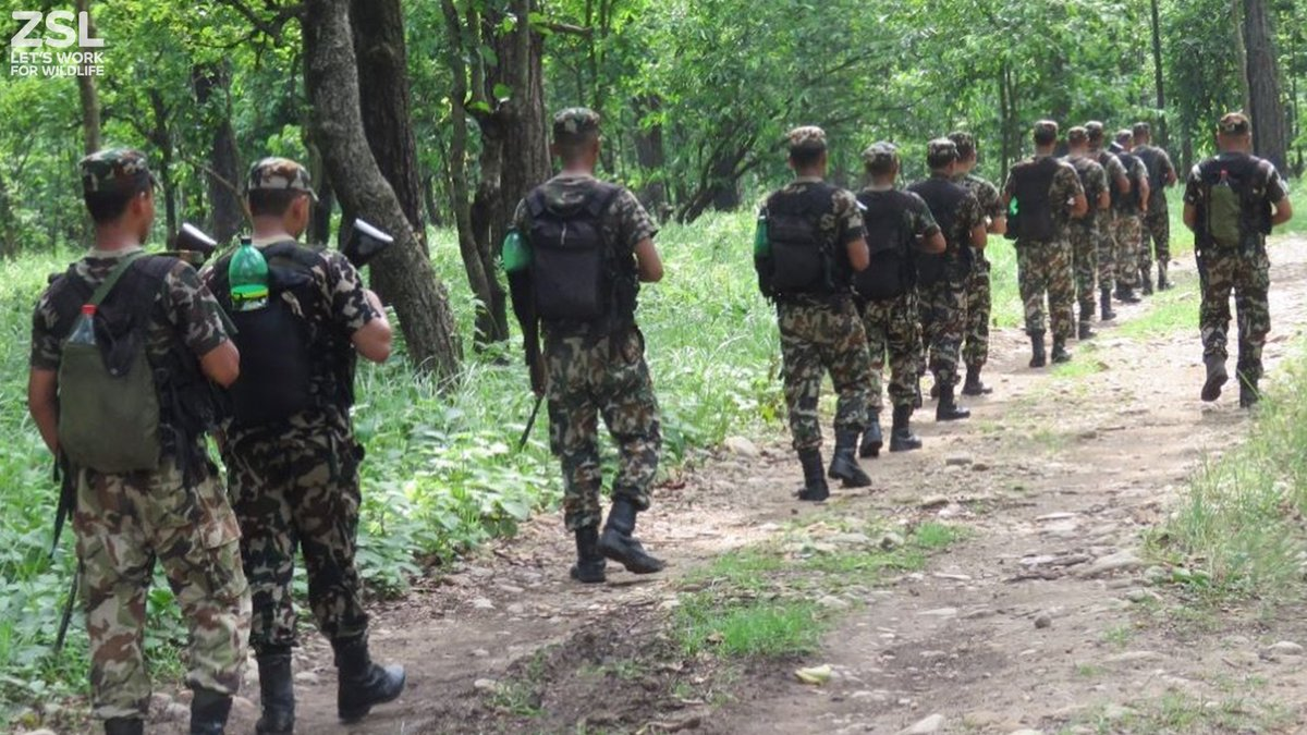 ZSL has now been supporting #SMART anti-poaching patrols in #Parsa National Park for over 3 years! @KfW @IUCN #Nepal #conservation #tigers<br>http://pic.twitter.com/PcEPTbRHyo