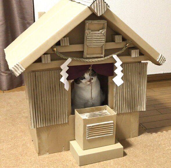 猫神様の神社は段ボール製w母が作成した段ボール神社のクウォリティ高すぎwww
