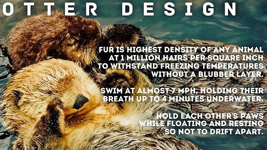 """Then GOD Said, ""Let the earth bring forth living creatures according to their kind and it was so."" ~Genesis1:24  #CREATION #Otters<br>http://pic.twitter.com/w8fa4whNA3"