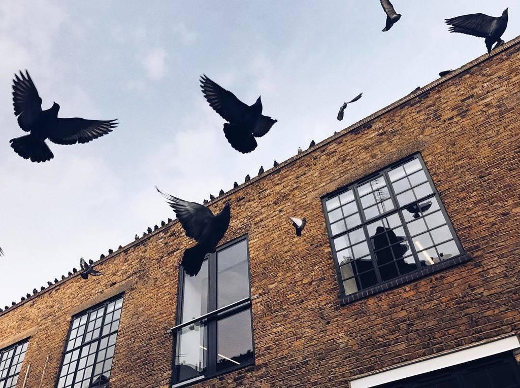 Feed the birds https://t.co/CIoDCbWPBa https://t.co/7Zbf0SlmOI