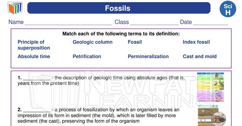 NewPathWorksheets NPathWorksheets – Fossils Worksheets