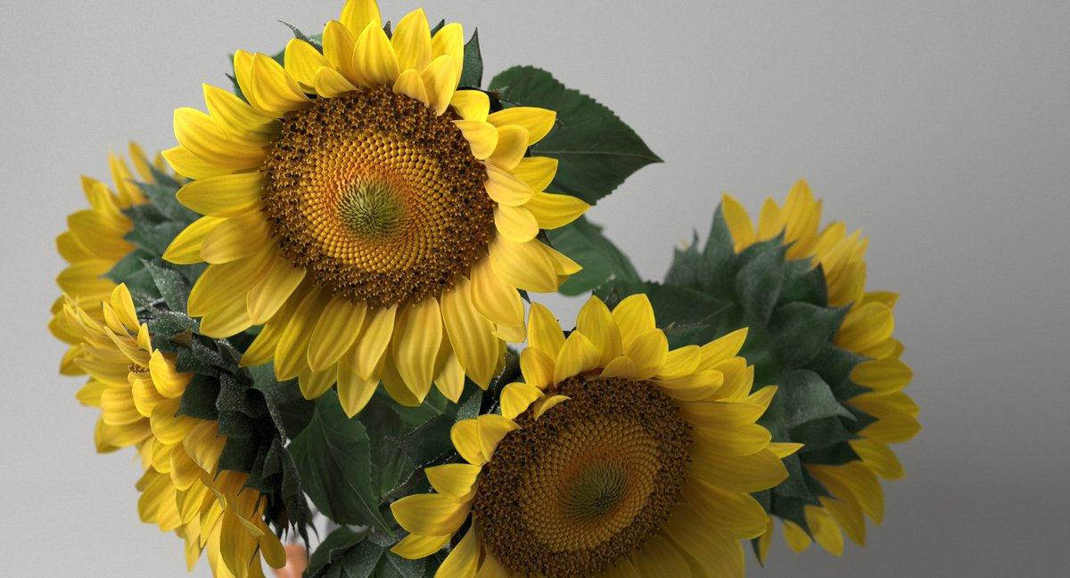 Rustic Sunflower Bouquet Model Photorealistic 3d Of Sunflowers 3DS MAX VRay