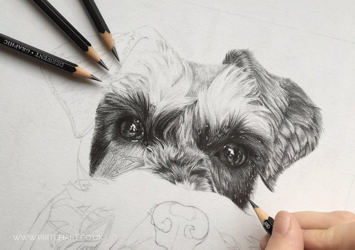 I'm working on this lovely little girlie this week  #petportrait #dog #miniatureschnauzer #wip #pencils #art #blackandwhite<br>http://pic.twitter.com/7pE6FgAOaq