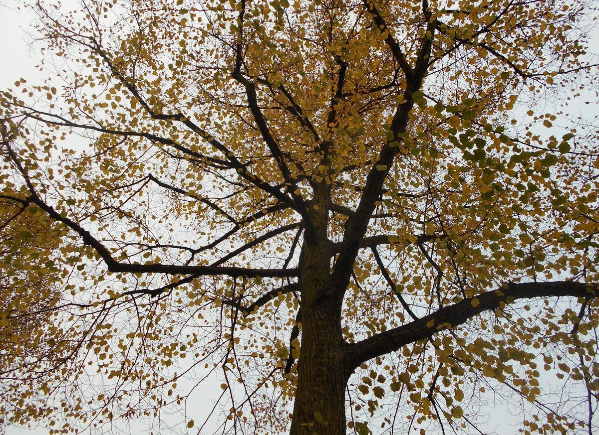 #squirrel#autumn#tree #hamburg today <br>http://pic.twitter.com/SYeNu31JYS