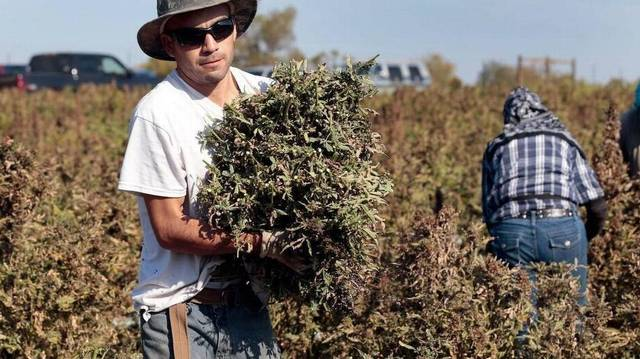 Hemp stigma fades in SC as scores apply for production permits    http://www. thestate.com/news/local/art icle179169476.html &nbsp; …  #MME #Hemp #Hempseeds #Hempoil #SouthCarolina #SC<br>http://pic.twitter.com/0DzlleRpEe