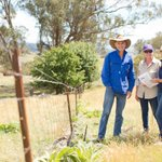 Information sessions to inform landholders of the options for managing native vegetation to be held in #Hillston today. #westernregion