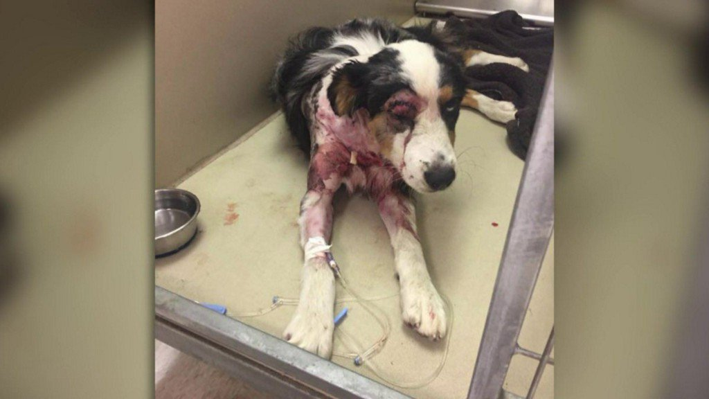 Virginia Boarding Kennel, Owner Charged after Investigations into Recent Dog Deaths https://t.co/DOviGtPPRL