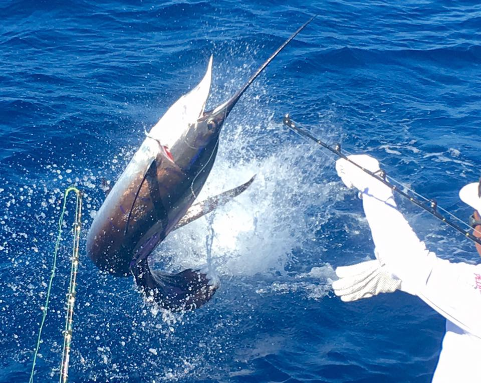 Guatemala - Sur Reel went 11-17 on Sailfish.