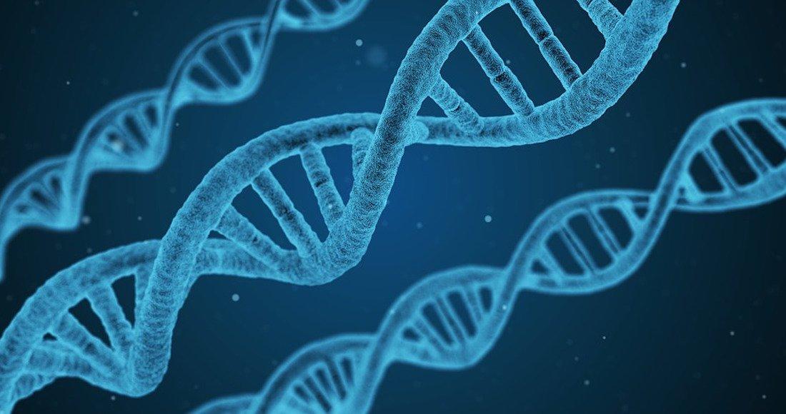 Una proteína sería la clave de la eterna juventud, revela un estudio h...