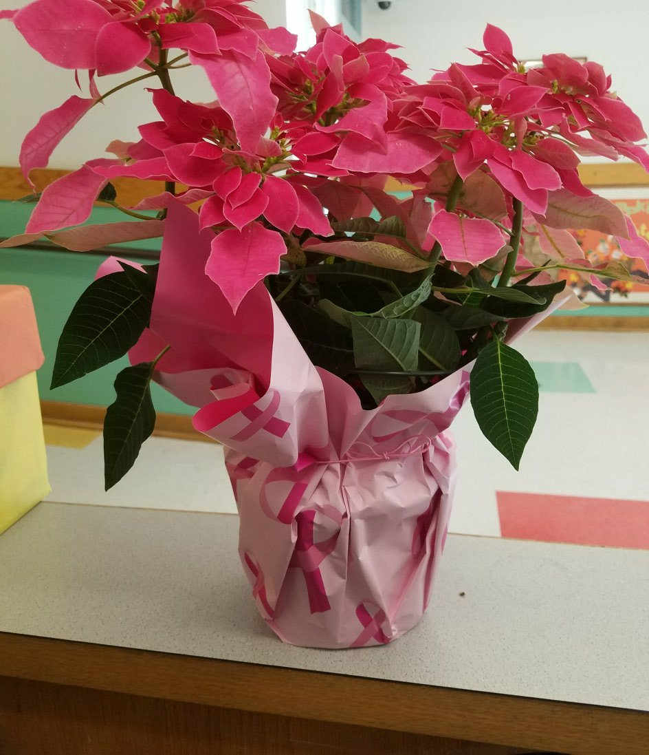 When someone thinks of U &amp; leaves these at your desk.Then tells U becuz U are such a sweet person! #PinkPoinsettias #BreastCancerSurvivor <br>http://pic.twitter.com/tpZ66JnSgo