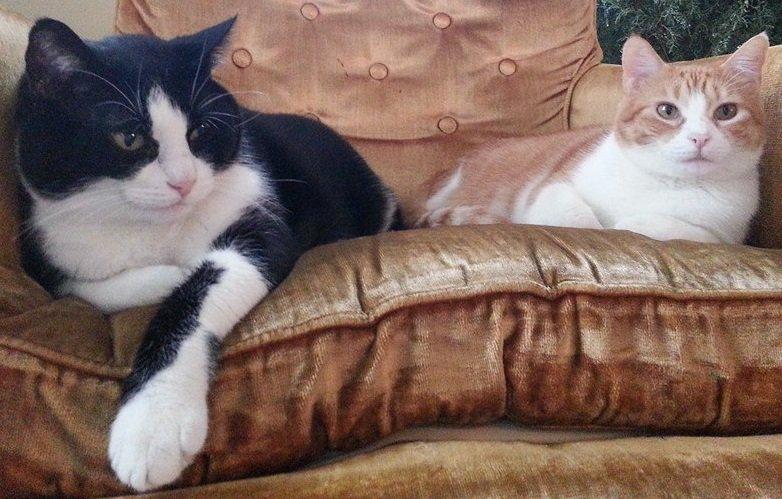 Lolly Winston On Twitter Hiya Kitties