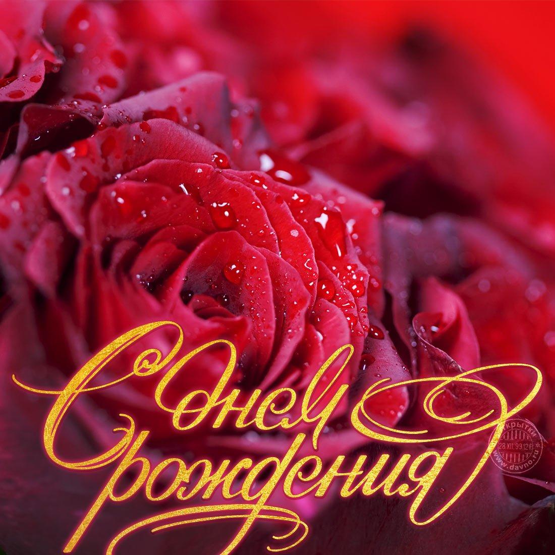 Для девочек, открытки с розами поздравления с днем рождения