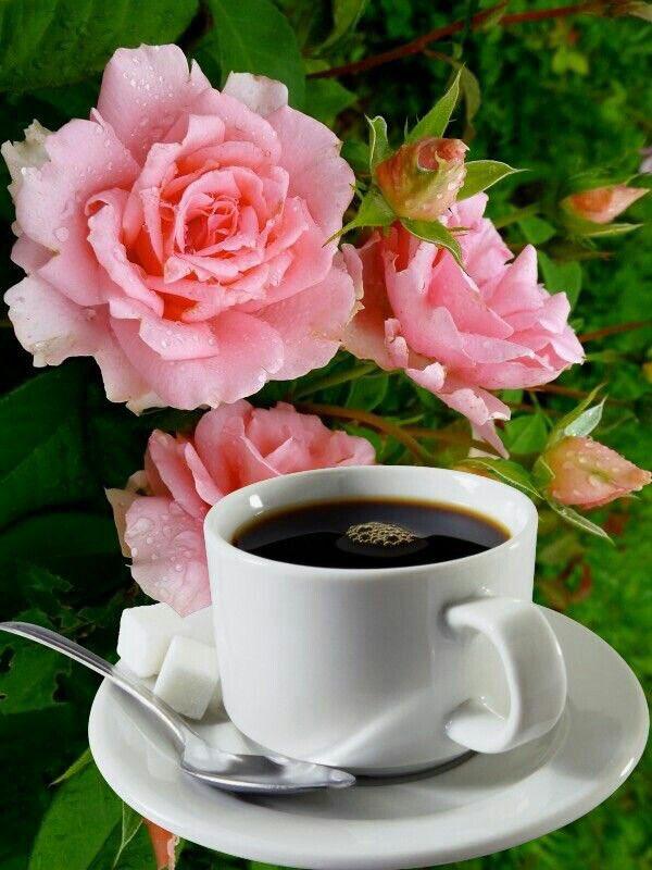 Картинках, открытка с цветами доброе утро хорошего дня