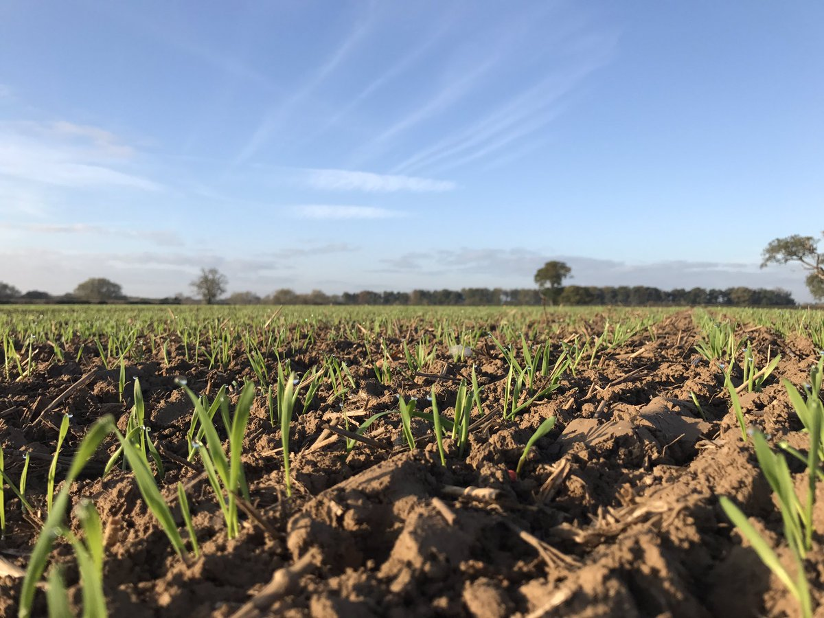 What&#39;s not to love about an autumnal morning! #farming #agronomy #wheat #yorkshire<br>http://pic.twitter.com/KR83N6eWbd