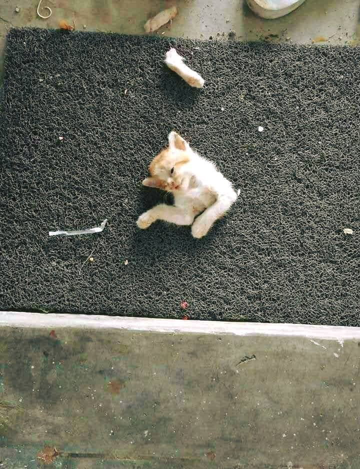 Download 66+  Gambar Kucing Mati Paling Bagus