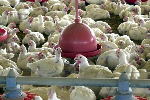 Brasil vence disputa na OMC e deve exportar frango para a Indonésia em 2018. https://t.co/FTAa71iXR2  📷 Arquivo/ABr