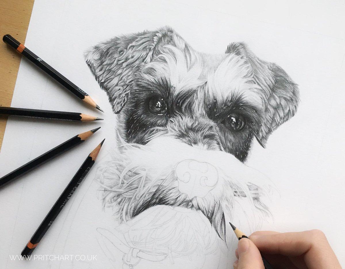 Today's update on this little girl  #dog #pet #petportrait #wip #pencils #derwent #schnauzer #miniatureschnauzer #art #drawing #artist<br>http://pic.twitter.com/6UuQprbG53