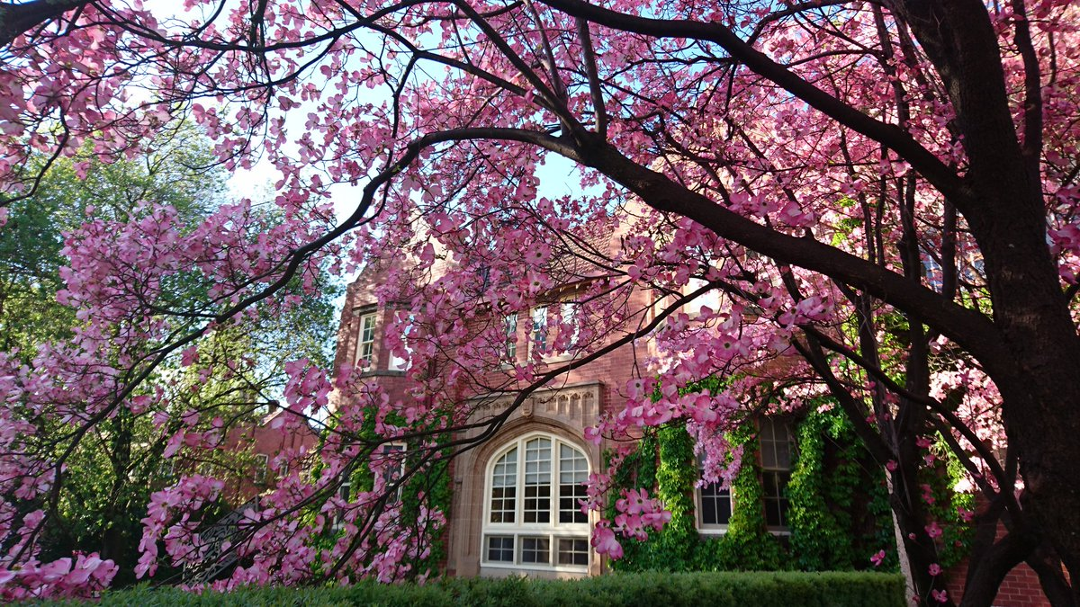 This photo was sent to us by a staff member last week - what a lovely photo of our campus in spring!